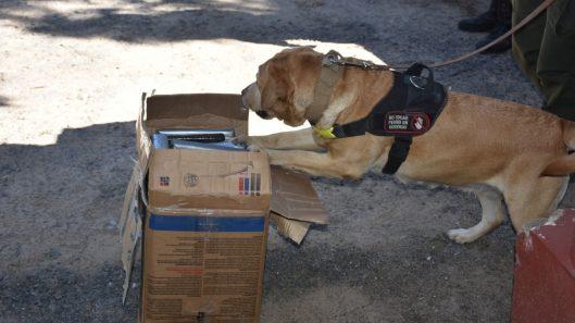 """Con el apoyo del can """"July"""", la Gendarmería incautó más de 30 kilos de marihuana en un control vehicular (1)"""